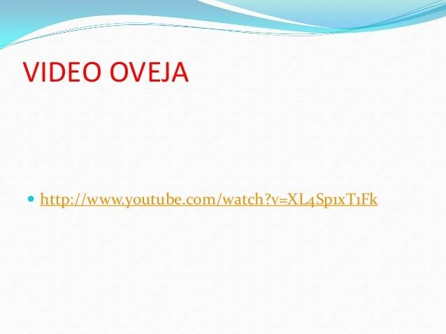 VIDEO OVEJA   http://www.youtube.com/watch?v=XL4Sp1xT1Fk