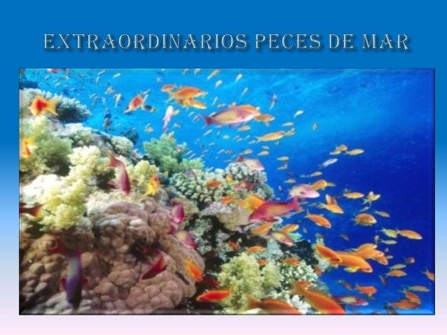 Animales de mar extra os y peces for Como hacer un lago para peces