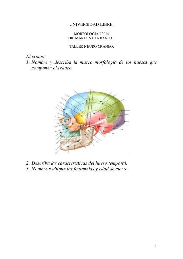 1 UNIVERSIDAD LIBRE. MORFOLOGIA I 2014 DR. MARLON BURBANO H. TALLER NEURO CRANEO. El crane: 1. Nombre y describa la macro ...