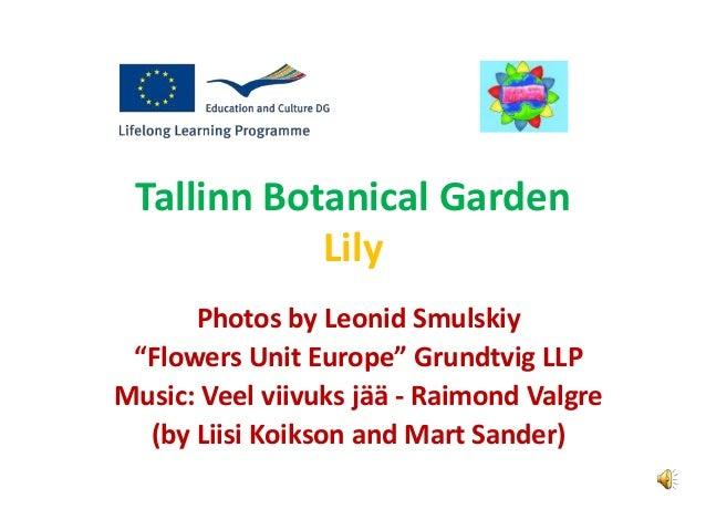"Tallinn Botanical Garden Lily Photos by Leonid Smulskiy ""Flowers Unit Europe"" Grundtvig LLP Music: Veel viivuks jää - Raim..."