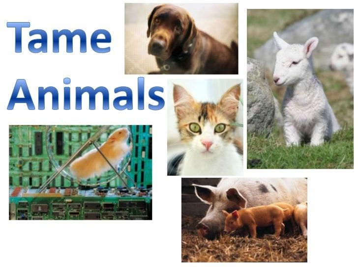 Tame Animal Slide Show