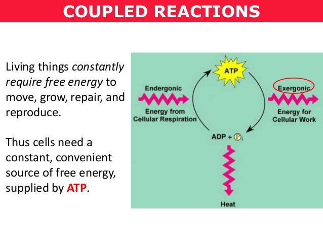 how do anabolic and catabolic reactions related to energy