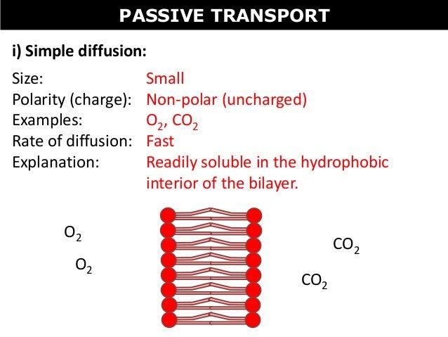 steroid facilitated diffusion