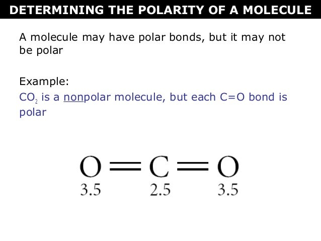 Tang 08 Polarity