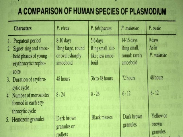 Asexual life cycle of plasmodium species comparison