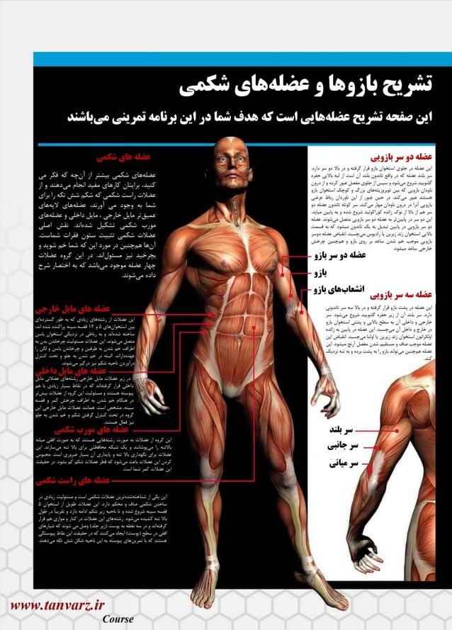 آموزش بدنسازی در 28 روز