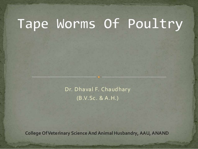 Tape worm of poultry