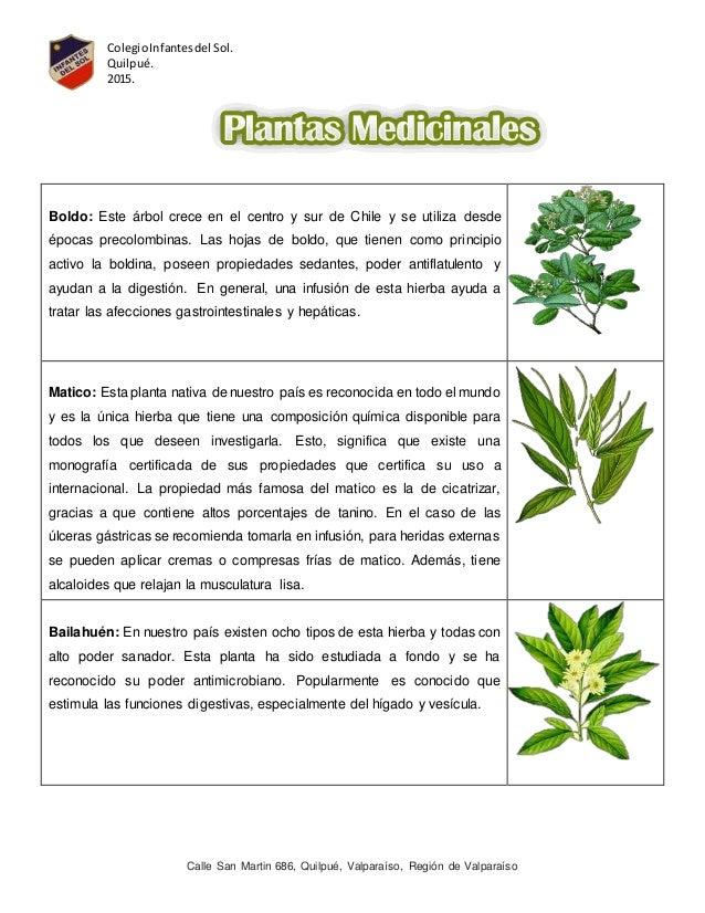 Plantas medicinales y no medicinales for Tipos de hierbas medicinales