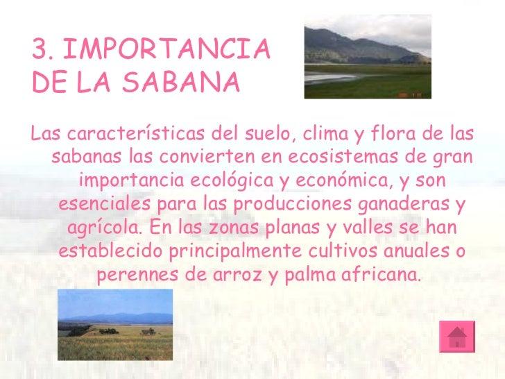 Tarea la sabana for Importancia de los suelos