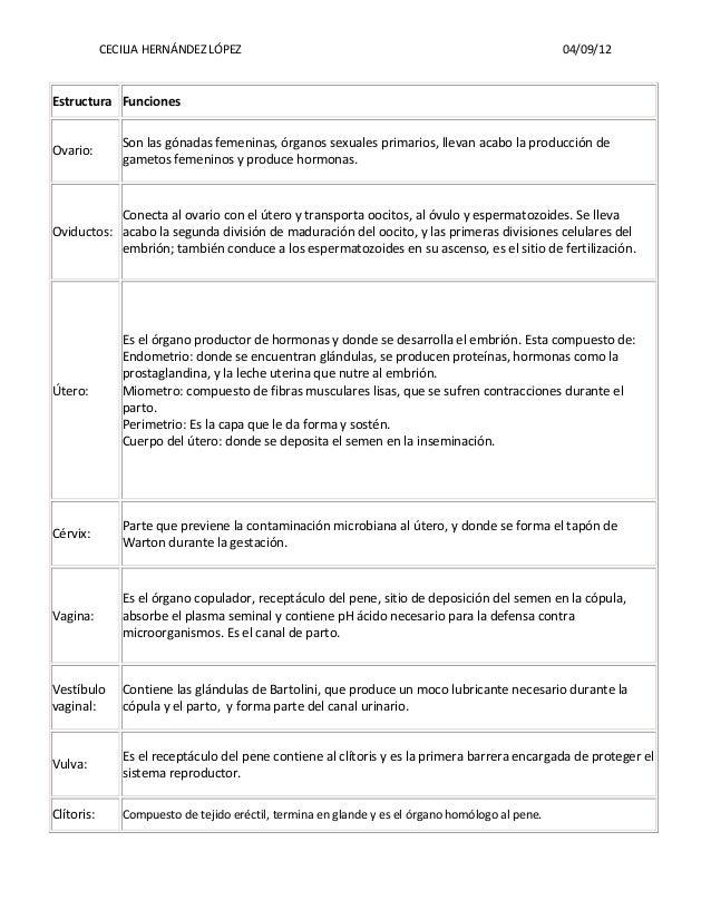CECILIA HERNÁNDEZ LÓPEZ 04/09/12 Estructura Funciones Ovario: Son las gónadas femeninas, órganos sexuales primarios, lleva...