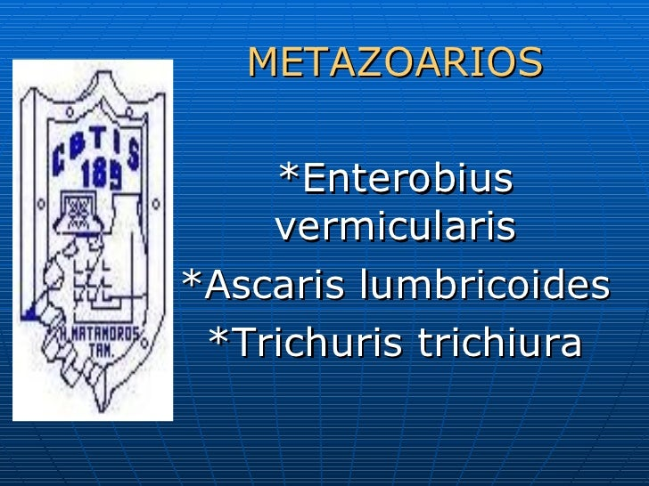 METAZOARIOS *Enterobius vermicularis *Ascaris lumbricoides *Trichuris trichiura