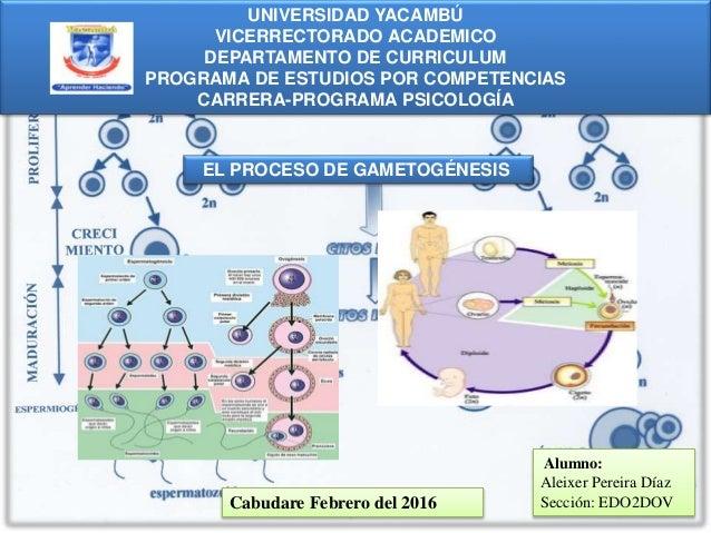 UNIVERSIDAD YACAMBÚ VICERRECTORADO ACADEMICO DEPARTAMENTO DE CURRICULUM PROGRAMA DE ESTUDIOS POR COMPETENCIAS CARRERA-PROG...