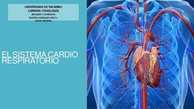 EL SISTEMA CARDIO RESPIRATORIO UNIVERSIDAD DE YACAMBU CARRERA: PSICOLOGÍA BIOLOGÍA Y CONDUCTA SECCIÓN: EDO01DOV 2017-1 JOS...