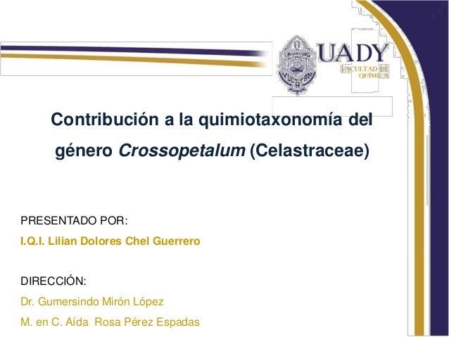 Contribución a la quimiotaxonomía deI      género Crossopetalum (Celastraceae)PRESENTADO POR:I.Q.I. Lilian Dolores Chel Gu...