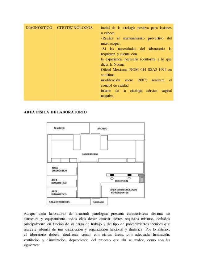Magnífico Laboratorio De Anatomía Macroscópica Viñeta - Imágenes de ...
