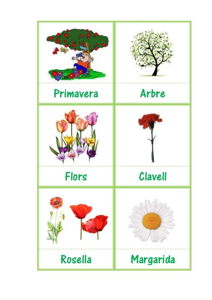 Primavera    Arbre  Flors      Clavell Rosella    Margarida
