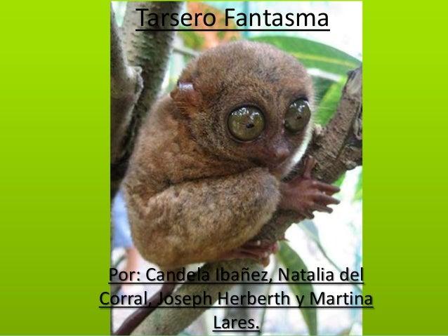 Tarsero Fantasma  Por: Candela Ibañez, Natalia del Corral, Joseph Herberth y Martina Lares.