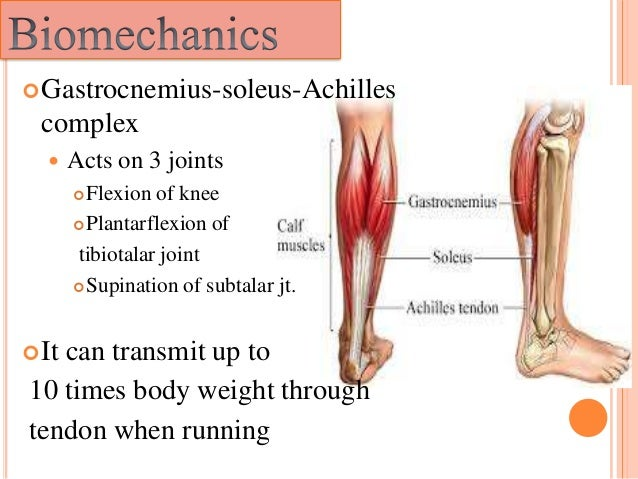 The gallery for --> Soleus Muscle Strain Soleus Muscle Pain Symptoms