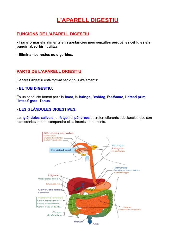 LAPARELL DIGESTIUFUNCIONS DE LAPARELL DIGESTIU- Transformar els aliments en substàncies més senzilles perquè les cèl·lules...
