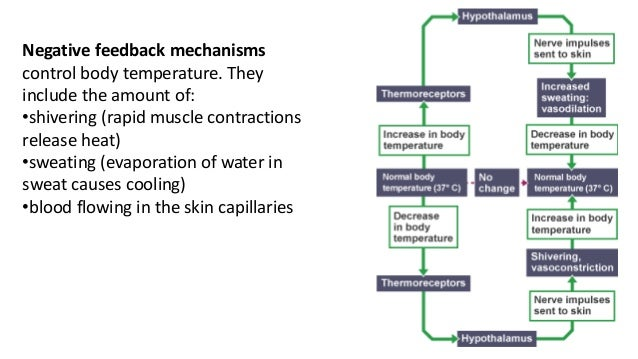 Task 4 14 negative feedback mechanisms control body temperature ccuart Choice Image