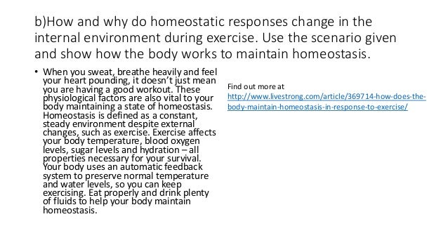 how does the body return to homeostatic levels after vigorous exercise involves