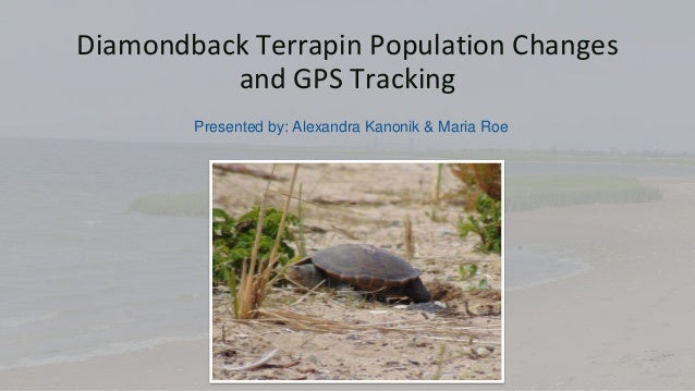 Diamondback Terrapin Population Changes and GPS Tracking Presented by: Alexandra Kanonik & Maria Roe