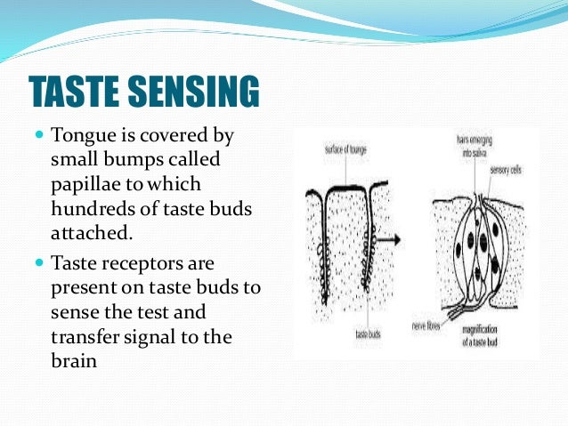 TASTE SENSING  Tongue is covered by small bumps called papillae to which hundreds of taste buds attached.  Taste recepto...