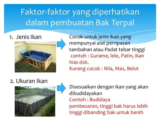Tata Letak Dan Konstruksi Wadah Budidaya Ikan