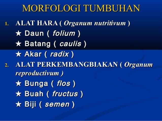 MORFOLOGI TUMBUHAN1.   ALAT HARA ( Organum nutritivum )     ★ Daun ( folium )     ★ Batang ( caulis )     ★ Akar ( radix )...