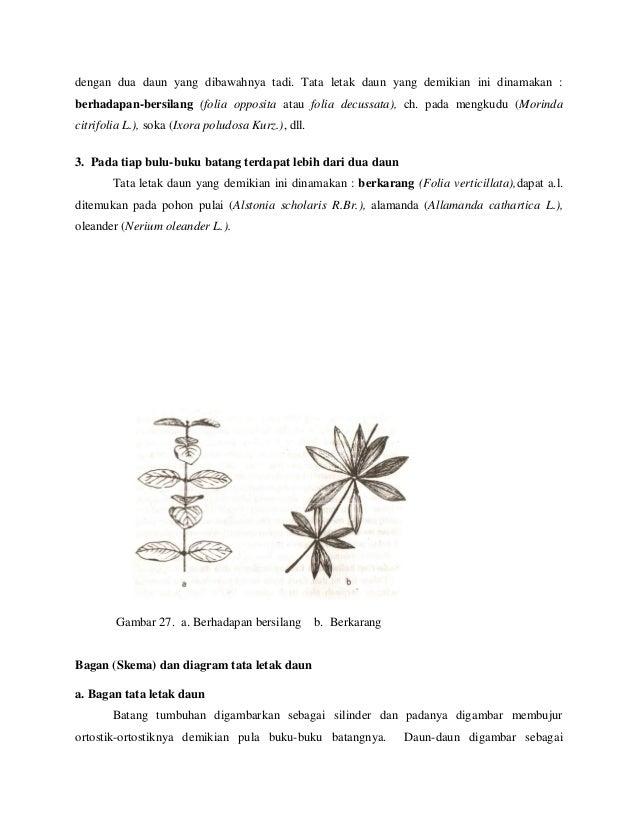 Anmorfistum 31 dengan dua daun ccuart Image collections