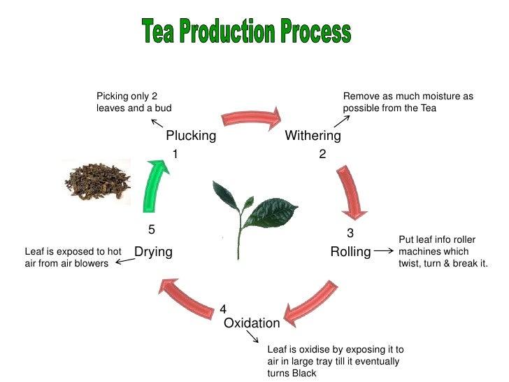 tea production process Five Ideas To Organize Your Own Tea
