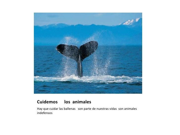 Cuidemos      los  animales <br />Hay que cuidar las ballenas   son parte de nuestras vidas  son animales indefensos<br />