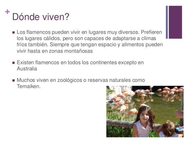 Tati flamencos - Donde viven los acaros ...