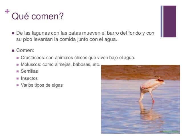 Q Comen Los Flamingos Tati flamencos