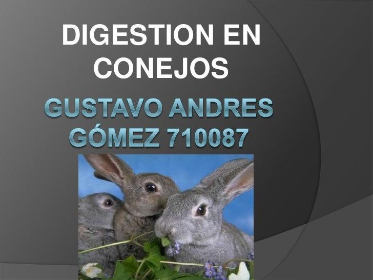 DIGESTION EN CONEJOS<br />Gustavo ANDRES Gómez 710087<br />