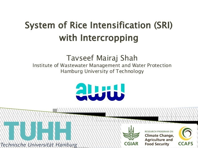 System of Rice Intensification (SRI) with Intercropping Tavseef Mairaj Shah Institute of Wastewater Management and Water P...