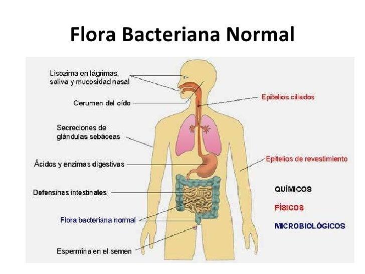 normal body flora