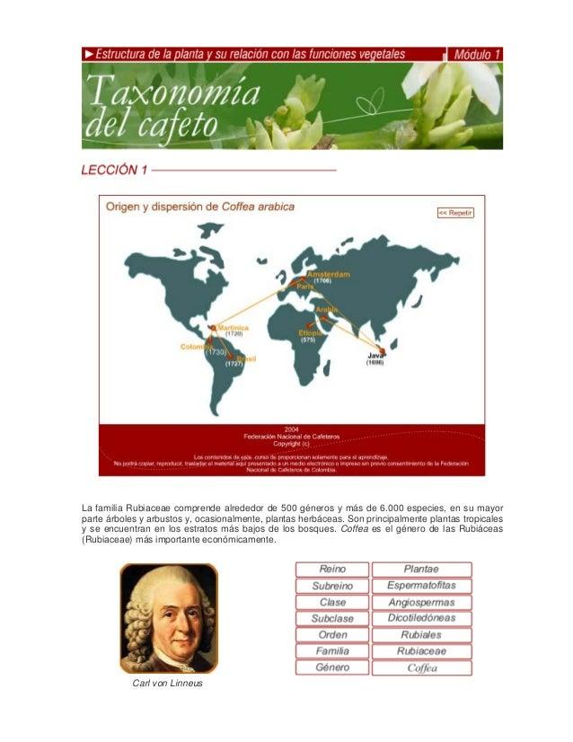 La familia Rubiaceae comprende alrededor de 500 géneros y más de 6.000 especies, en su mayorparte árboles y arbustos y, oc...
