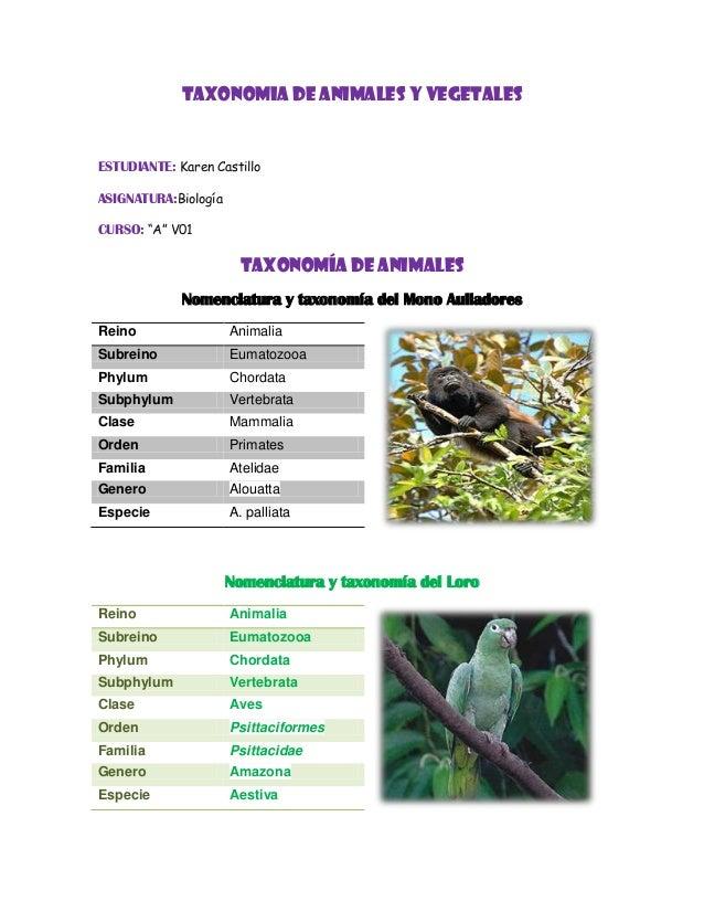 Taxonomia for Pececillo nuevo de cualquier especie