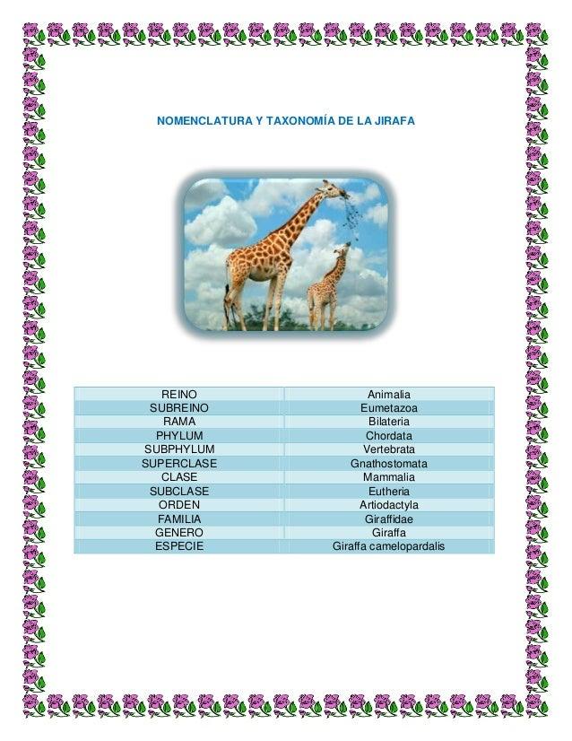 taxonomia ForTaxonomia De La Jirafa