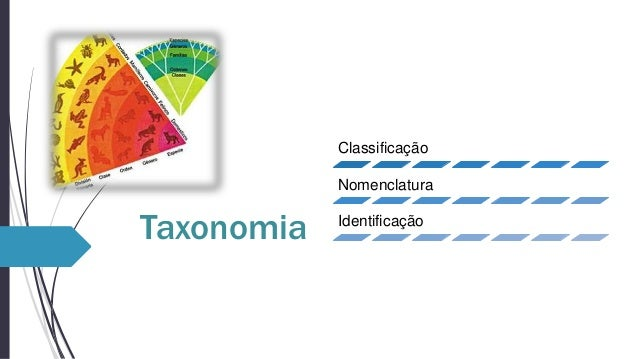 Classificação Nomenclatura  Taxonomia  Identificação
