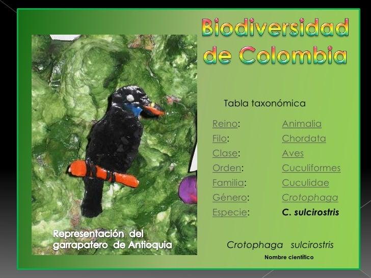 Biodiversidad de Colombia<br />Tabla taxonómica<br />Representación  del  garrapatero  de Antioquia <br />Crotophagasulcir...