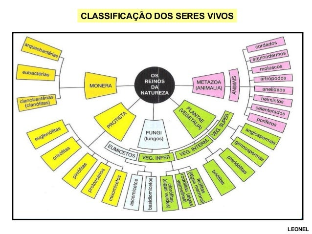 CLASSIFICAÇÃO DOS SERES VIVOS  LEONEL
