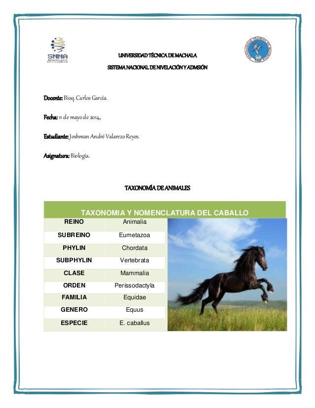 Taxonomia y nomenclatura de los animales y las plantas for Taxonomia de la jirafa
