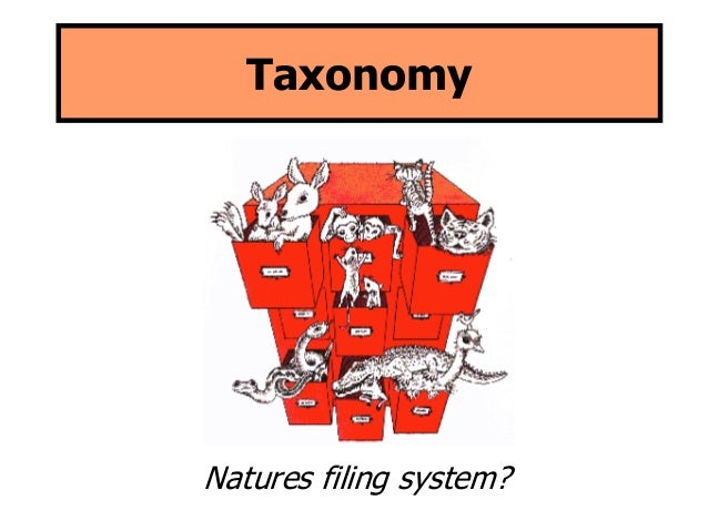 Taxonomy  Natures filing system?