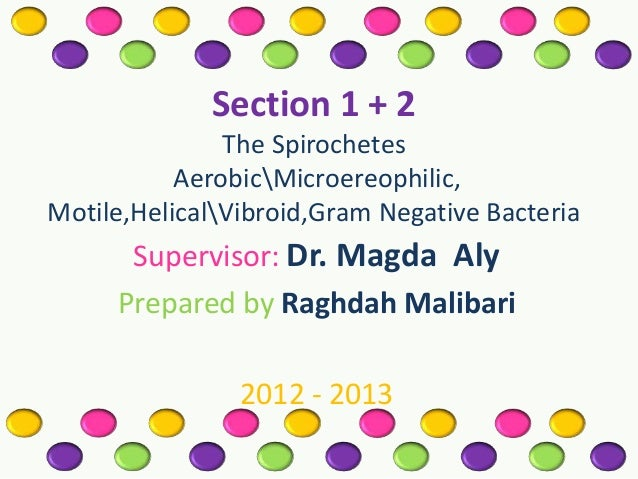 Section 1 + 2 The Spirochetes AerobicMicroereophilic, Motile,HelicalVibroid,Gram Negative Bacteria  Supervisor: Dr. Magda ...