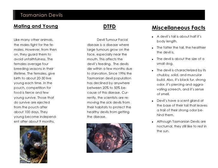 Tazmanian Devils Project Slide 2