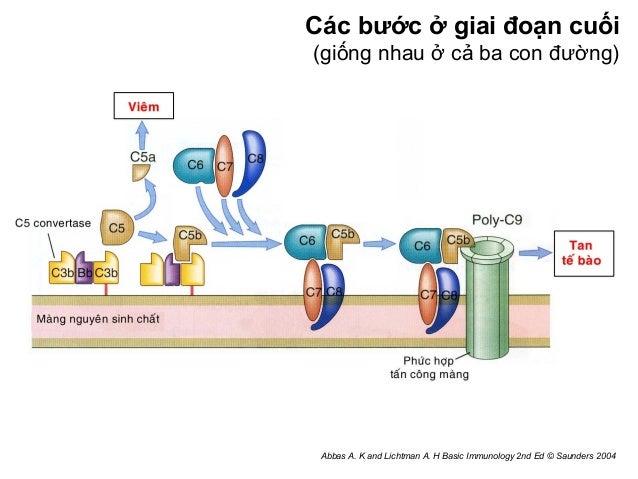abbas and lichtman basic immunology pdf