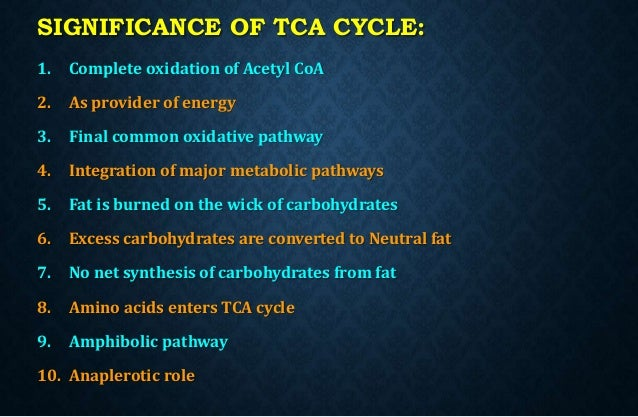 Participation of TCA cycle in fatty acid synthesis from glucose