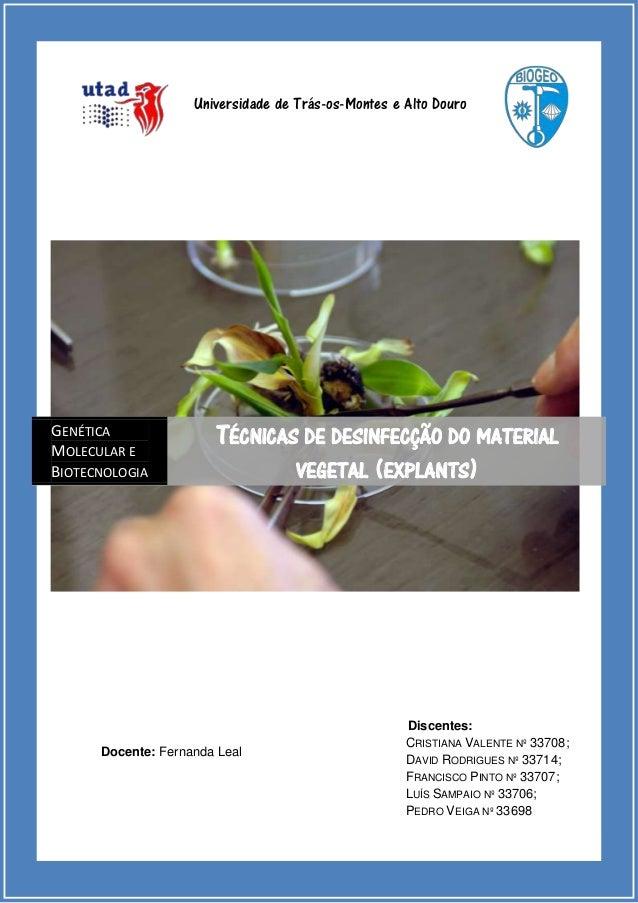 Universidade de Trás-os-Montes e Alto Douro  GENÉTICA MOLECULAR E BIOTECNOLOGIA  TÉCNICAS DE DESINFECÇÃO DO MATERIAL VEGET...